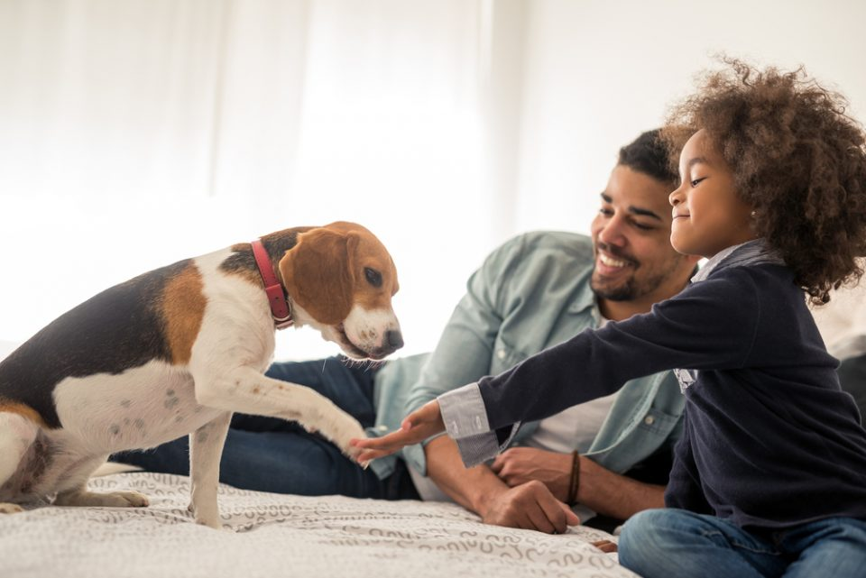 5 Fun Ideas For Spending More Time With Your Pet